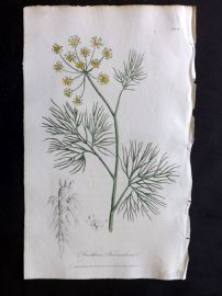 Cox Medical Botany 1822 Hand Col Botanical Print. Common Fennel 41